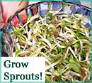 Kitchen Sprout Garden